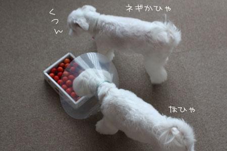 7_1_6600.jpg