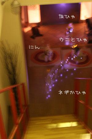 7_20_8519.jpg