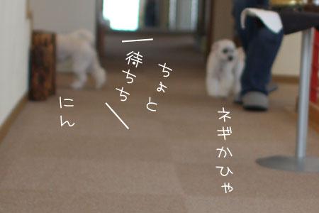 7_2_6644.jpg