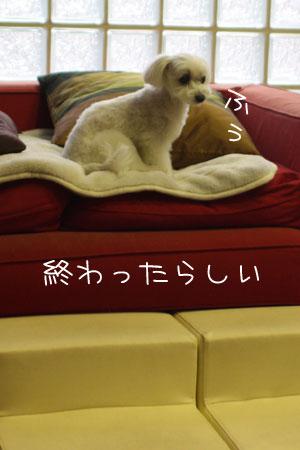 7_3_6811.jpg