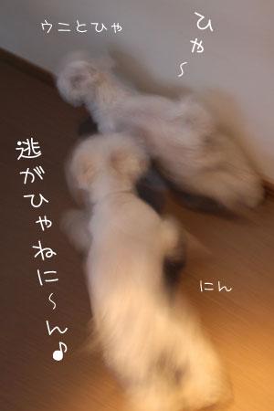 8_10_9761.jpg