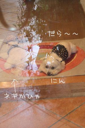 8_11_9817.jpg