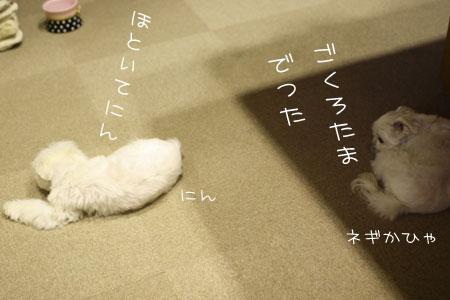 8_12_9869.jpg
