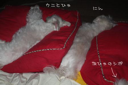 8_13_4059.jpg
