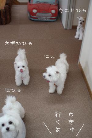 8_13_9927.jpg