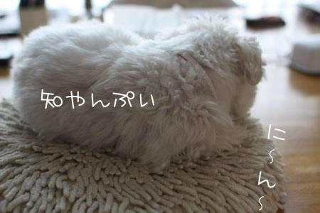 8_16_0249.jpg