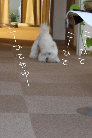 8_16_0367.jpg