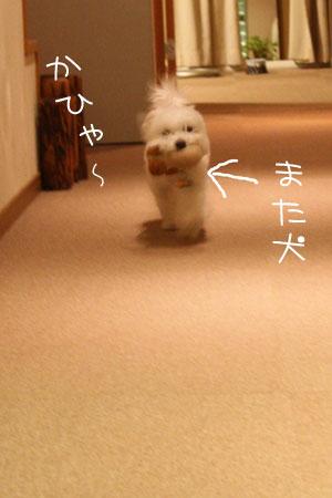 8_16_0439.jpg