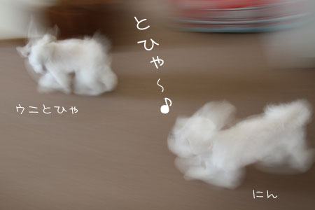 8_1_9154.jpg