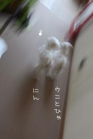 8_1_9156.jpg