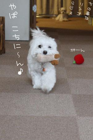 8_20_0741.jpg