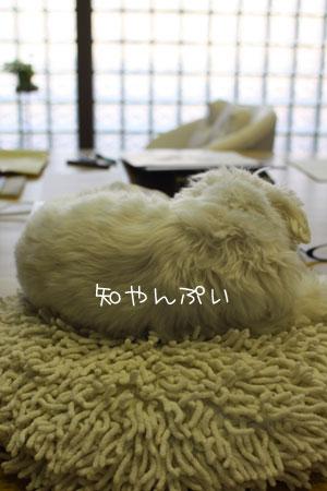 8_22_0975.jpg