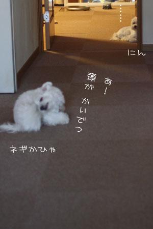 8_25_1290.jpg