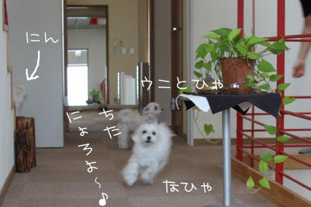 8_9_9536.jpg