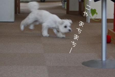 8_9_9586.jpg