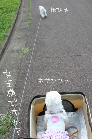 9_17_8704.jpg