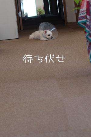 9_2_1687.jpg