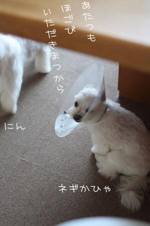9_2_1700.jpg