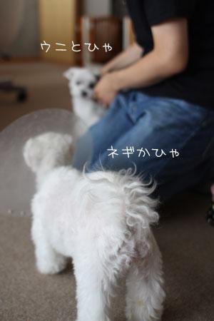 9_7_2218.jpg