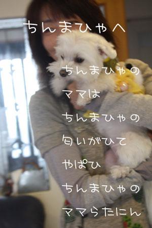 to_tinmata_9443.jpg