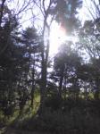 木漏れ日よ美しい光達