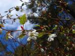 キイチゴの花  根ノ上湖