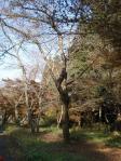 千本桜付近の紅葉。。もみじもよかったんだ!