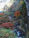偶然通りかかった渓谷 もみじの赤と木々の紅葉がすばらしい
