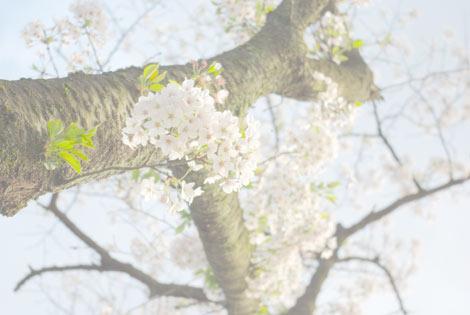 7_20100412020820.jpg