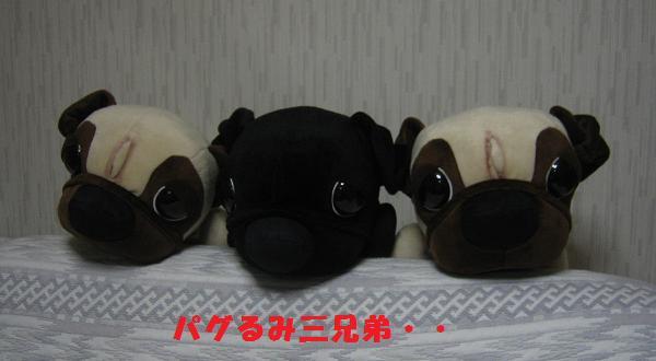 パグるみ(←みほみほさん命名)3兄弟