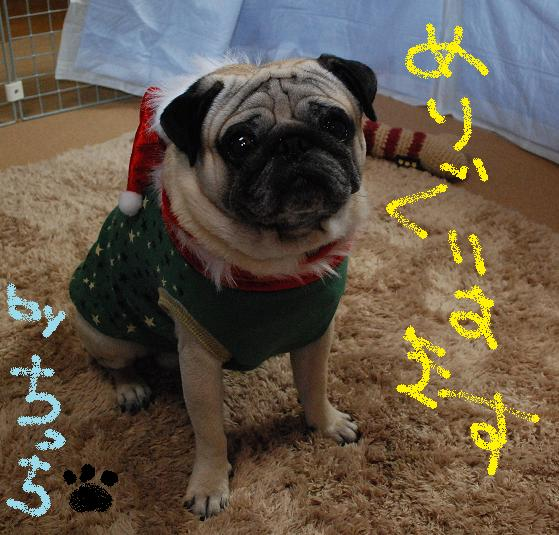 メリークリスマス!チッチより(はあと)