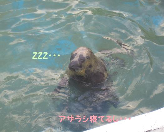 立ち泳ぎしたまま寝てる・・・