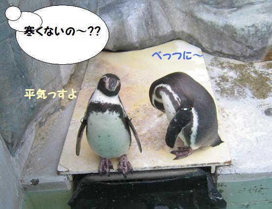 ペンギン達もへっちゃら~