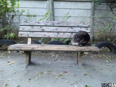 ネコはベンチで1