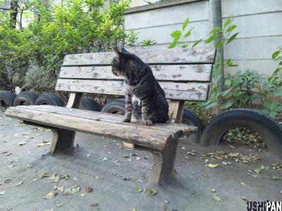 ネコはベンチで2