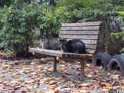 隣のベンチで寄り添う-3