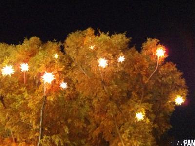 金平糖のなる木2