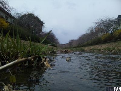 春の野川1