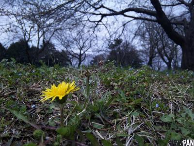春の野川2