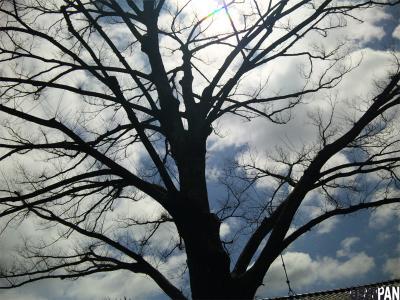 保存樹木1