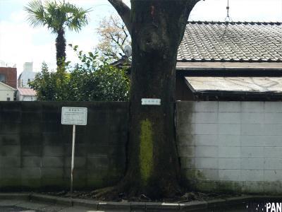 保存樹木2