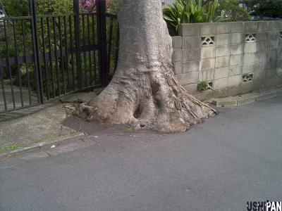 保存樹木3