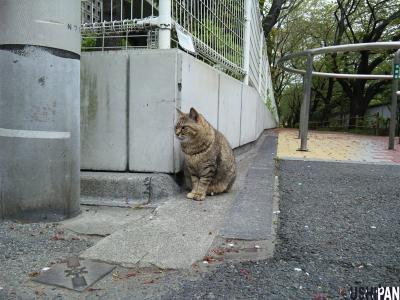 キジトラ刑事1
