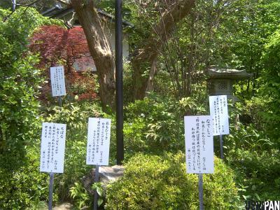 万葉植物園2