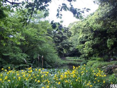和田掘公園2