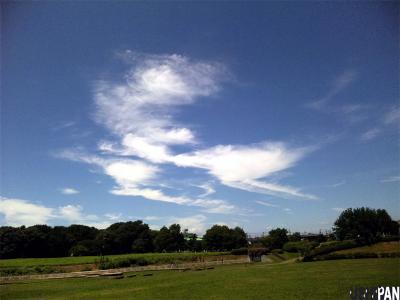 ウナギ雲1