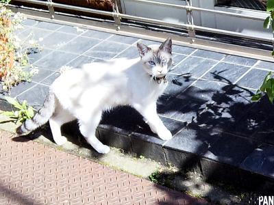 飼い猫さん1