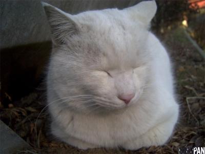 白い毛玉2