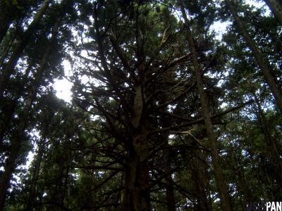 武甲山04