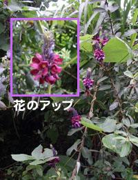 咲いていた紫のお花